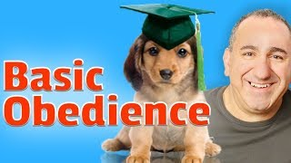 What is obedience training for dogs?