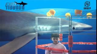 DIA 2 Expo Tiburon101