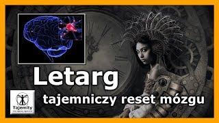 Letarg – tajemniczy reset mózgu