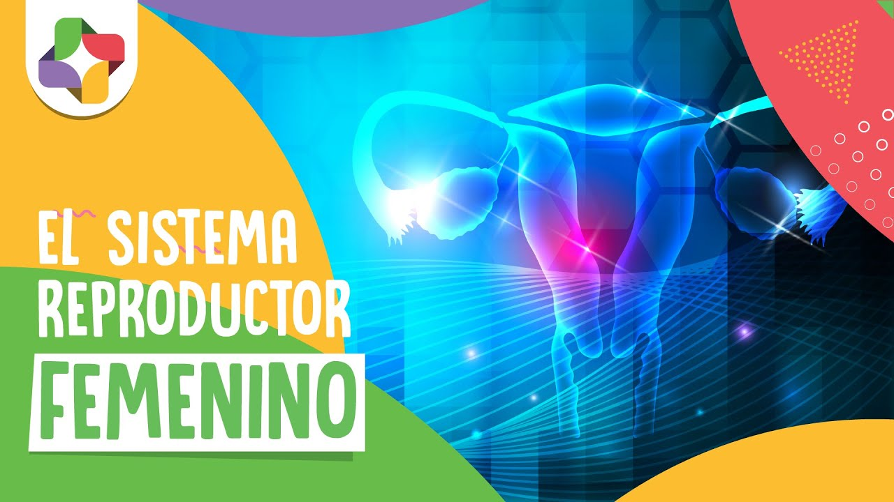 Educatina - Sistema Reproductor Femenino