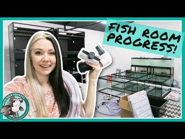 Building My Fish Room Water Change System! // VLOGMAS DAY 7