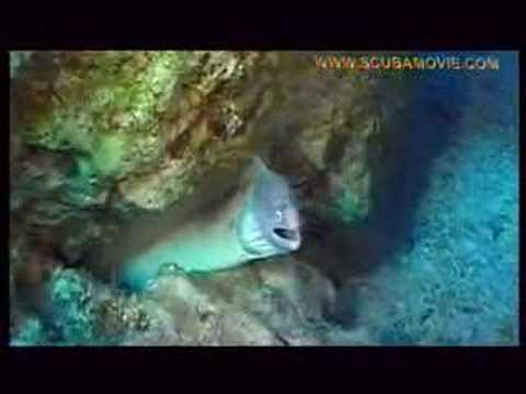 Faszinierende Unterwasserwelt, Dahab - allgemein,Ägypten