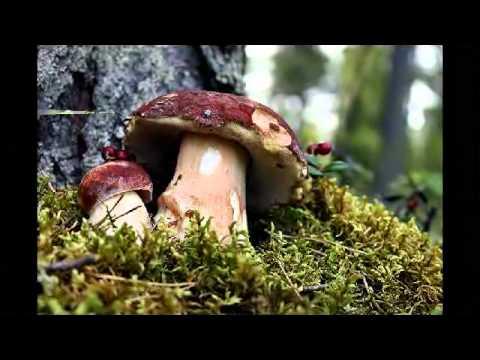 Unguento solforico per un fungo di unghie
