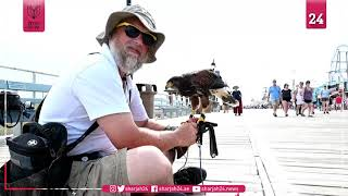 Hawkeyed: raptors liberate US beach town from hungry gulls