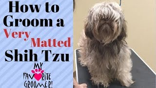 How to Groom a Shih Tzu Very Matted