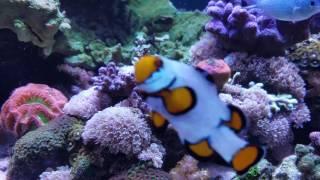 2 Years 3 Months - 40 Gallon Reef Tank Update