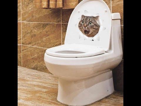 Зашли в туалет и увидели ЭТО? #Этозаразно ? #Скетч /Принцесса Стефания