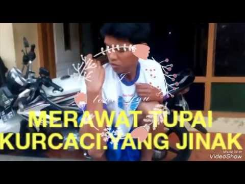 Video Tips menjinakan Tupai lucu