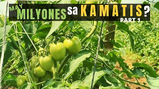 OFW SUCCESS STORY: Tips On TOMATO FARMING In Philippines | Business Option For OFW | Kamatis Farm