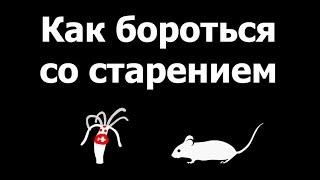 Голодные мыши не стареют. Александр Панчин на QWERTY