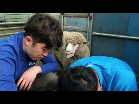 Screening Humanity   인간극장 - Romance On The Goat Farm, part 2 (2014.04.01)