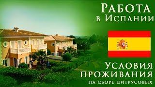 Работа в Испании   Условия проживания на сборе цитруса