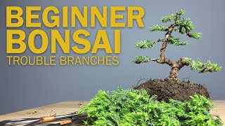 Beginner Bonsai Styling - Choosing Branches to Cut