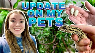 Reptile Room Vlog + Updates! | Eggs, Eggs, And More Eggs!