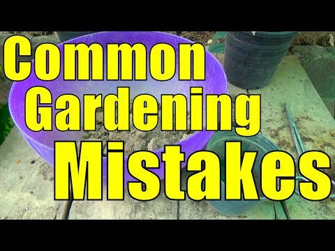 Common Gardening Mistakes We Do