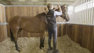 How To Prepare A Racehorse To Race (Part 1) #HorseHowTo