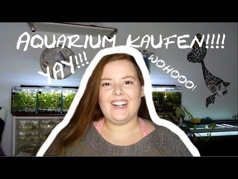 #2 Aquaristik 1x1: das erste Aquarium kaufen...