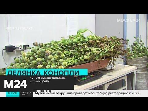 Россиянам разрешили выращивать мак и коноплю в лечебных целях - Москва 24