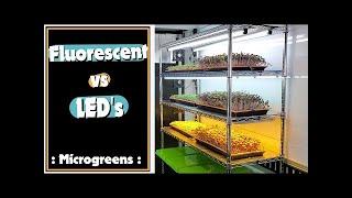 Microgreen Lighting: Fluorescent vs LED's - On The Grow