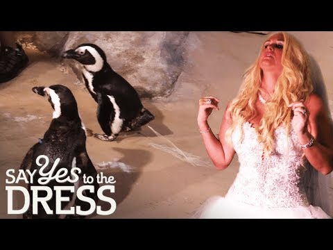 Bride Wants Live Penguins To Go With Her Wedding Ice Room | Say Yes To The Dress: The Big Day