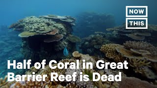 How Ocean Warming Has Killed 50% of Great Barrier Reef's Coral | NowThis Earth