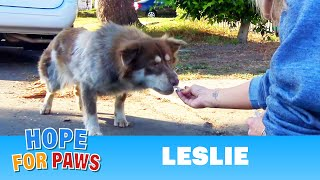 This rescue video begins on the streets and ends in the pacific ocean!
