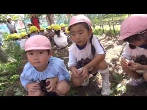 笠間 友部 ともべ幼稚園 子育て情報「ぶどう狩り」