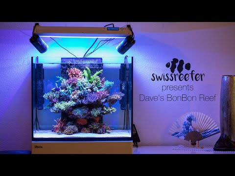 40 Acroporas in a Red Sea Reefer 170 |Dave's BonBon Reef [Swissreefer presents]