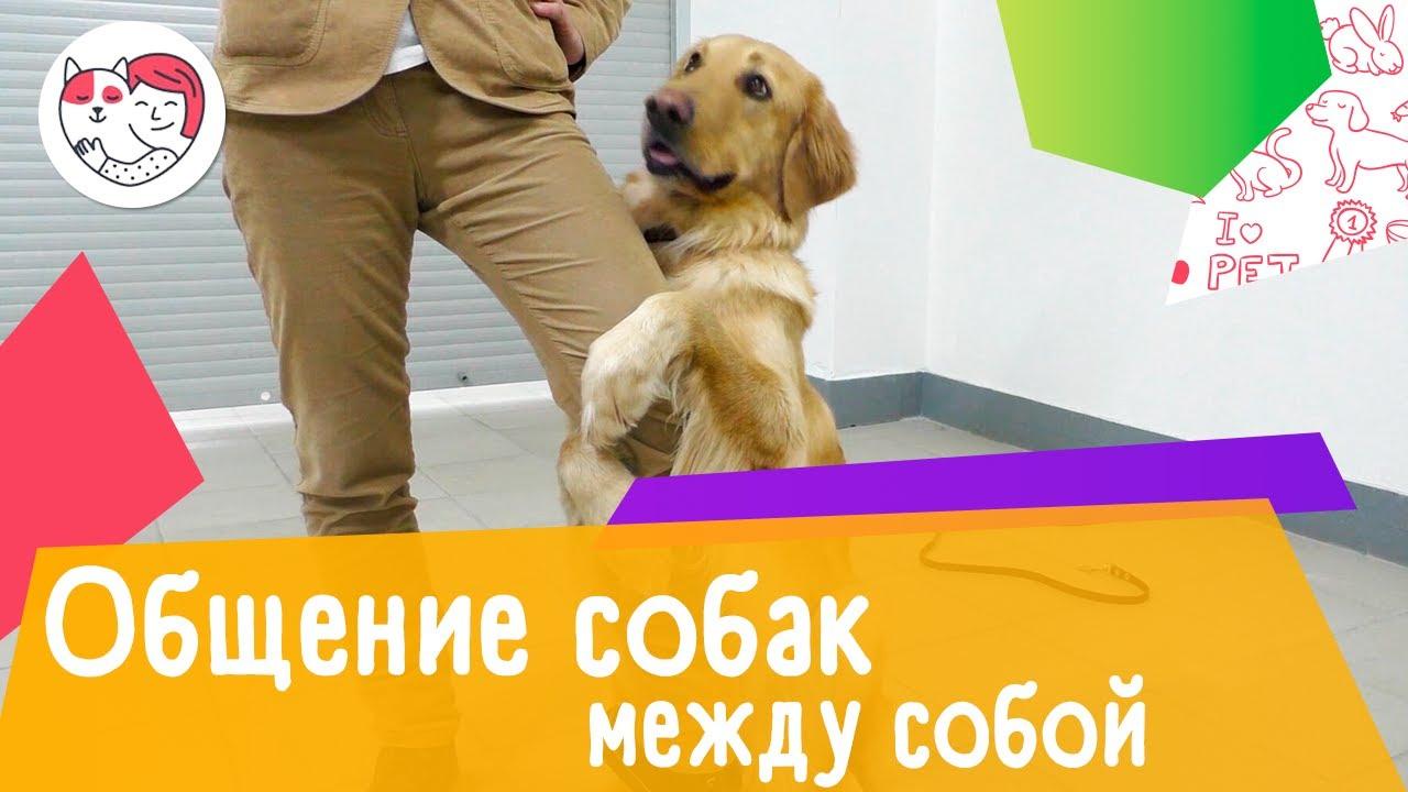 3 способа общения собак между собой
