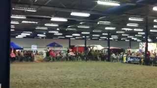 preview picture of video 'Salon du cheval - Tournai 2014'
