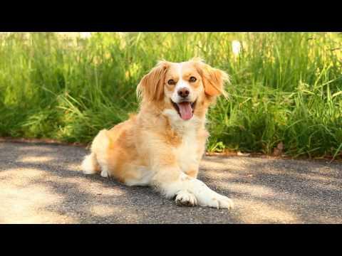 כלבת בר מדהימה מבצעת טריקים