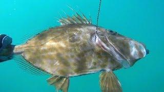 تحميل و مشاهدة الصيد تحت الماء في طنجة،واد أليان 2018 MP3