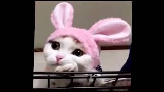 Смешные ролики с участием животных