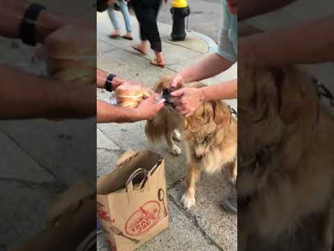 Yesterday, when walking home from the grocery store, we met a doggo named Murphy. We put down our bags to pet him. Murphy saw a golden opportunity to eat our buns.