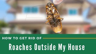 How to Get Rid of Roaches Outside My House - The Guardians Choice