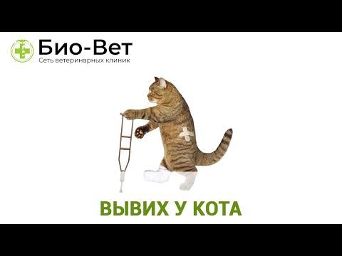 Вывих у кота. Ветеринарная клиника Био-Вет.