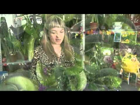 Вьющиеся и ампельные растения работают как энергетический пылесос