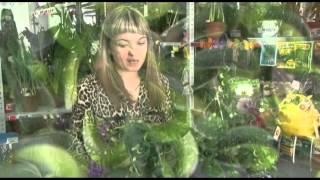Вьющиеся и ампельные растения видео