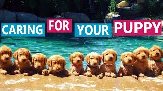How to Take Care of a Puppy | Dr Lisa's Tips for Families with Children