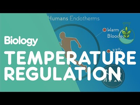 , title : 'Temperature Regulation Of The Human Body   Physiology   Biology   FuseSchool