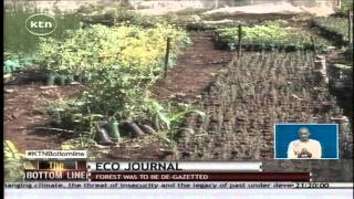 Eco journal: Nyeri locals start extending the tree planting campaign right into their farms