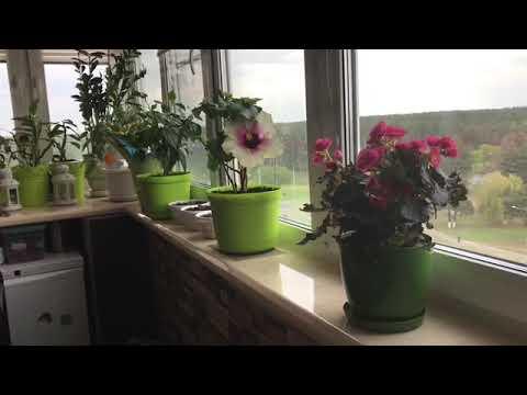 Мои цветы в мае