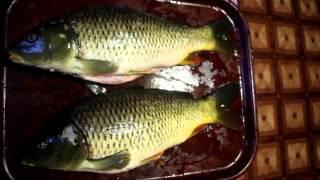 Как узнать возраст рыбы по чешуе
