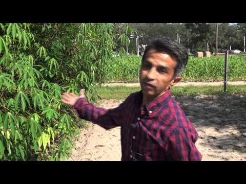 Careers In Plant Science