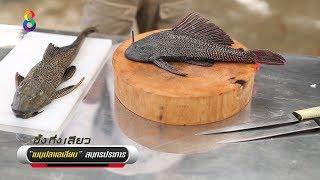 กล้ากินมั้ย? เมนูปลาซัคเกอร์!!! - dooclip.me
