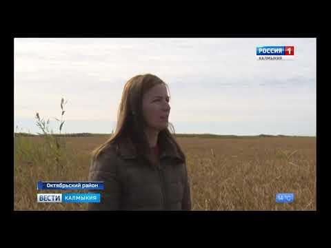 В Калмыкии Россельхознадзор осуществляет контроль за карантинным фитосанитарным состоянием риса-сырца