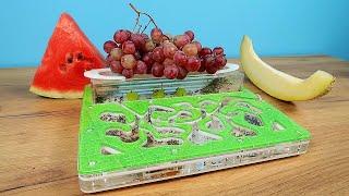 Что выберут Муравьи: Арбуз, Дыню или Виноград? Эксперимент с муравьями. alex boyko