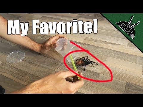 Hogyan lehet eltávolítani a paraziták recept