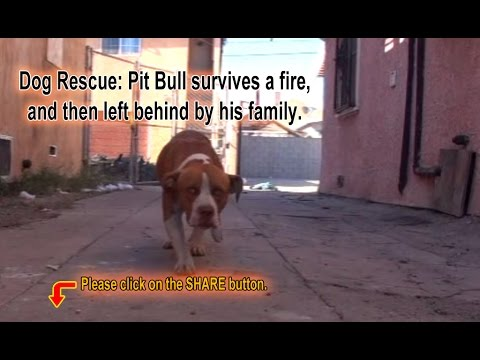 Halo Dog Rescue Charlotte Nc