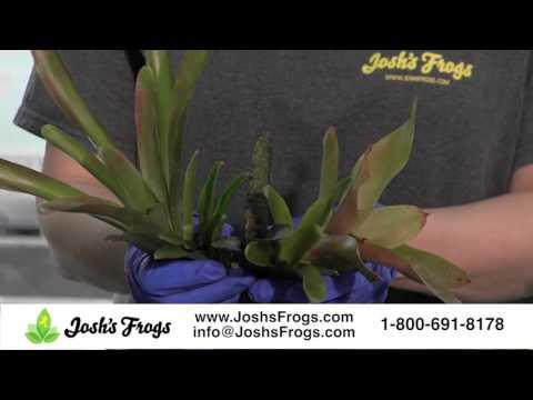 Josh's Frogs 18 x 18 x 24 / 29 Gallon Dart Frog Vivarium Plant Kit